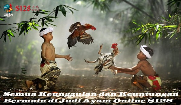 Semua Keunggulan dan Keuntungan Bermain di Judi Ayam Online S128